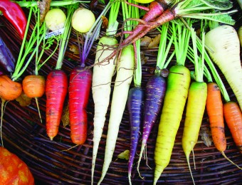 kokopelli-semences-biologiques-graines-reproductibles