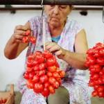 La tomate : pomme d'amour ou l'or de Naples