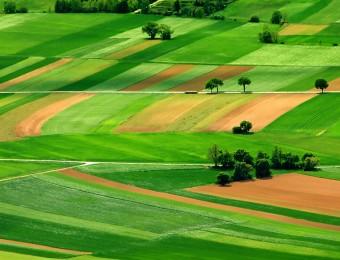 Agriculture France : le programme agricole des candidats