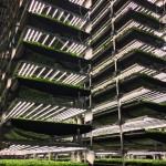 AeroFarms : la plus grande ferme verticale du monde