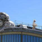 Des toits aux catacombes, plus de 700 ruches en activité à Paris