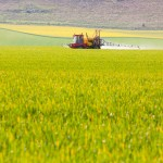 Glyphosate: Battle over health diagnosis