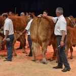 'Vegan', 'Leclerc', 'Mercosur': Taboo subjects in the world of livestock breeders