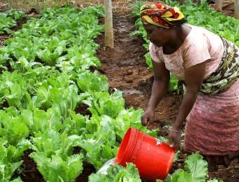femme agriculture Sénégal
