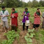 L'agroécologie pourrait nourrir et sauver la planète, selon l'Onu