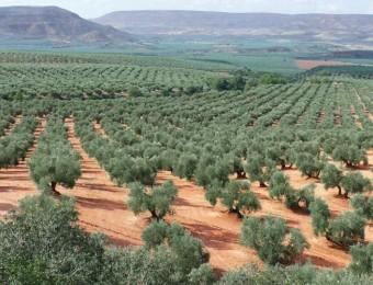 olive-trees-andalucia-andalusia-casafari-real-estate